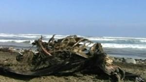 Mais de 600 pássaros e animais marinhos apareceram mortos na costa norte do Chile