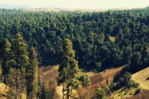 Ayuda a investigadores a calcular el carbono de los bosques. (Foto: ARCHIVO )