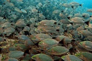 En todo el Caribe crece la tendencia de crear zonas de veda de pesca a fin de recuperar la fauna. (Foto: ARCHIVO )
