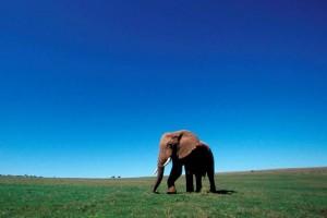 Unos 22 mil animales de esta especie murieron a manos de cazadores en 2012. (Foto: Archivo EFE )