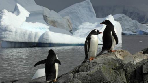 Antes uma coisa do futuro, os telefonemas para a Antártida hoje são simples de fazer